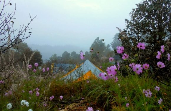 Mountains, bonfire and a plate of Jalebi: Mukteshwar, Uttarakhand